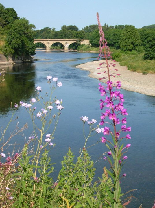 Flowers by River Tweed