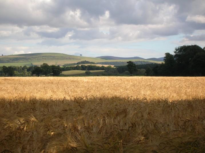 barley10ok
