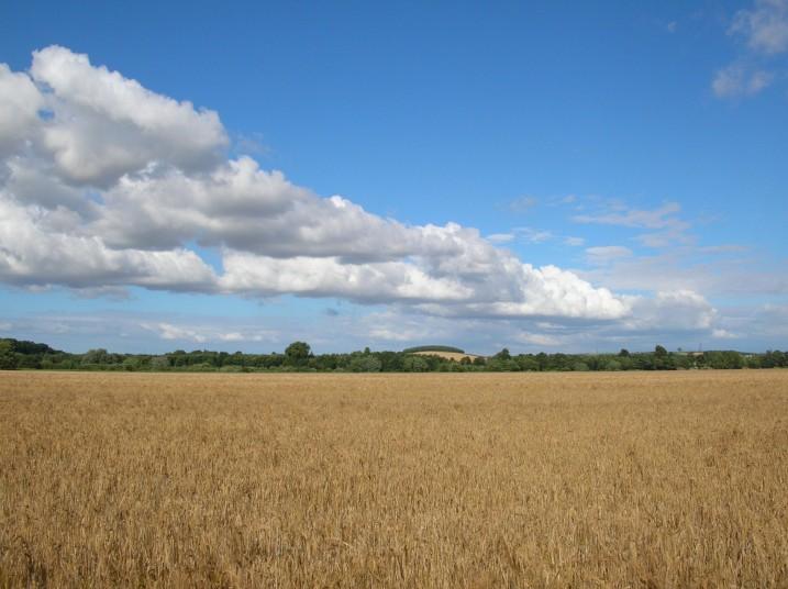 barley16