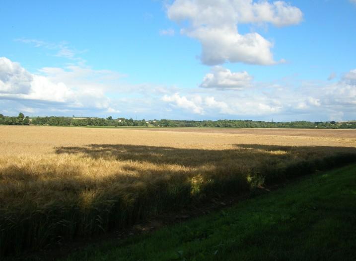 barley18a