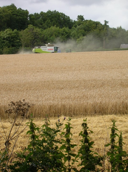 harvest9
