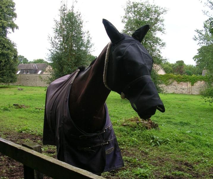 Horse in a Hood 2