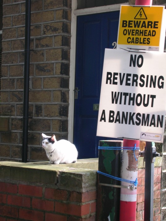 cat and notice