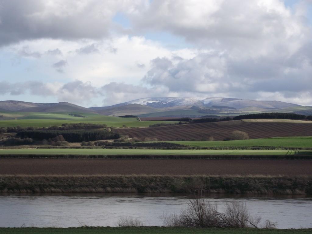 brown fields