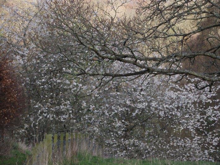 April Trees 2