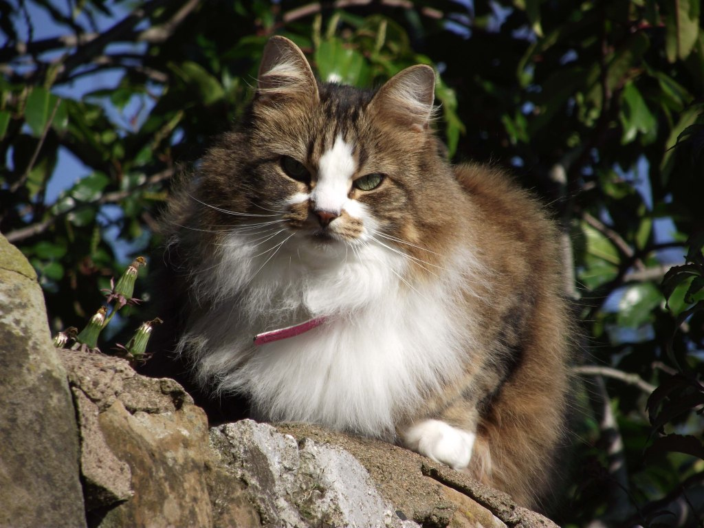 cat on a wall 4