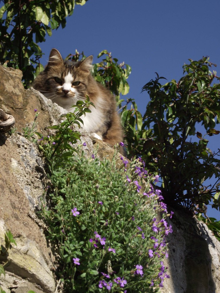 cat on a wall1