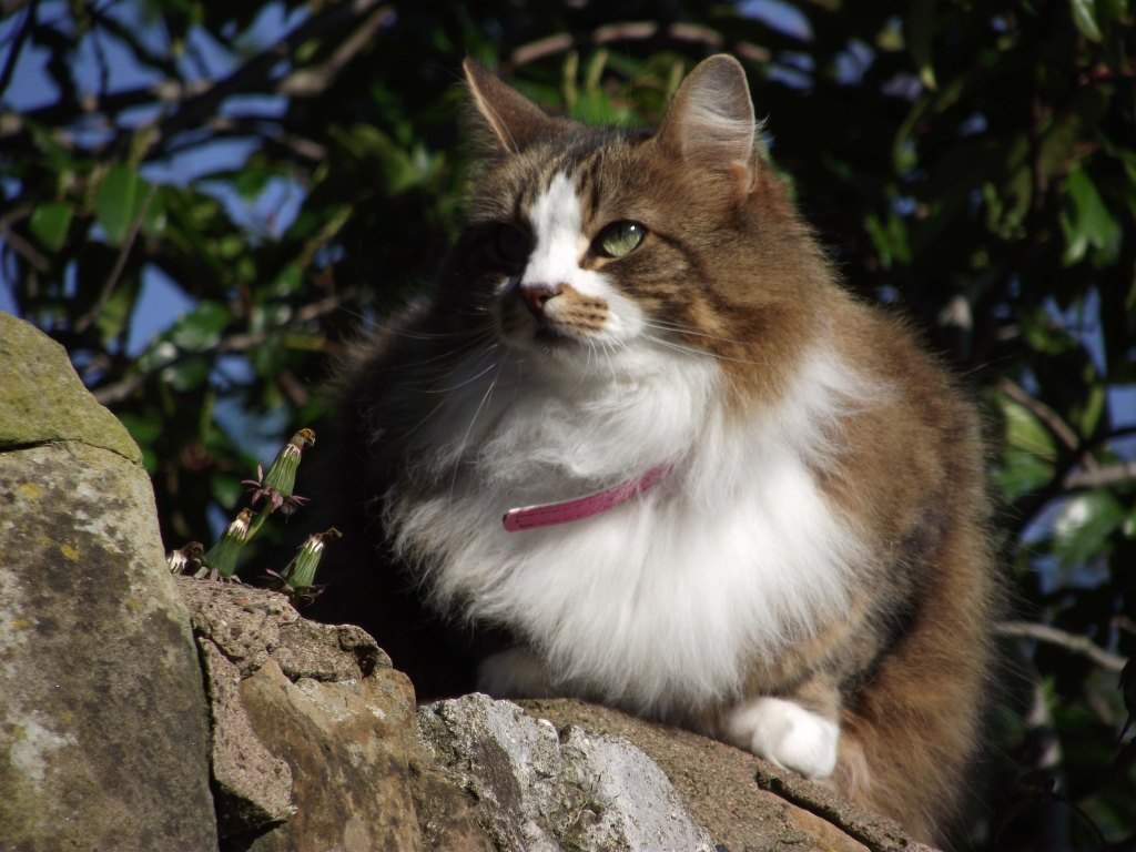 cat on a wall2