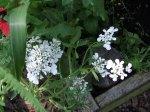 flowerbed10