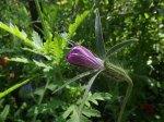 flowerbed14