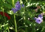 flowerbed4