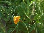 flowerbed5