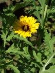 flowerbed6