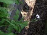flowerbed7