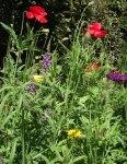 flowerbed8