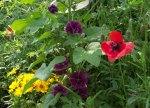 flowerbed9