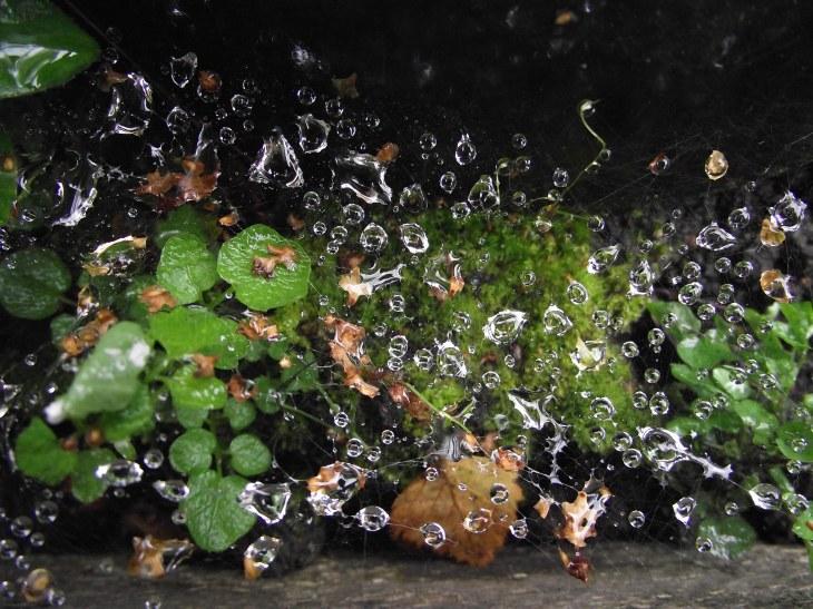 wateronspidersweb