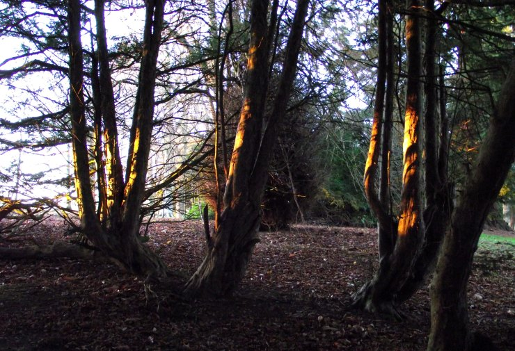 Trees and Sunlight 1