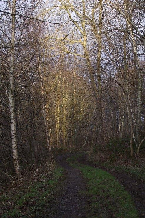 Light on Trees