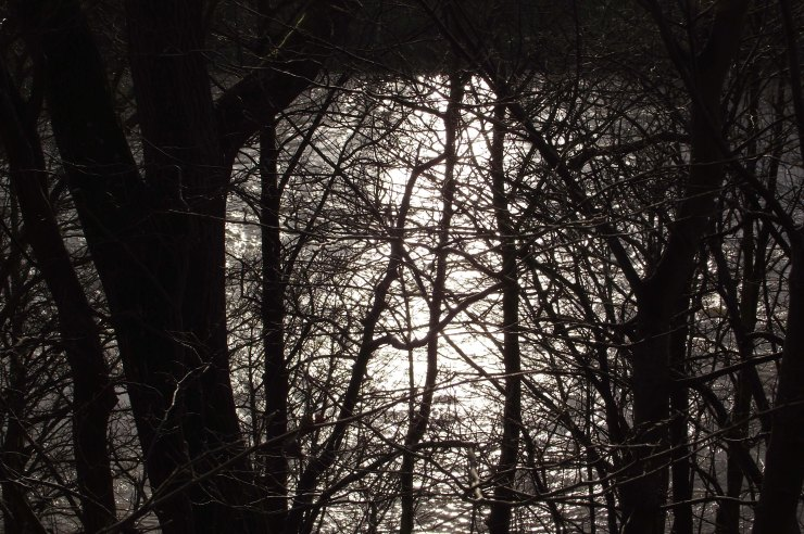 Trees, Light, River