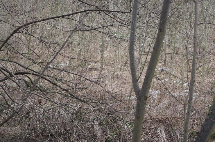 treesacrossthewater1