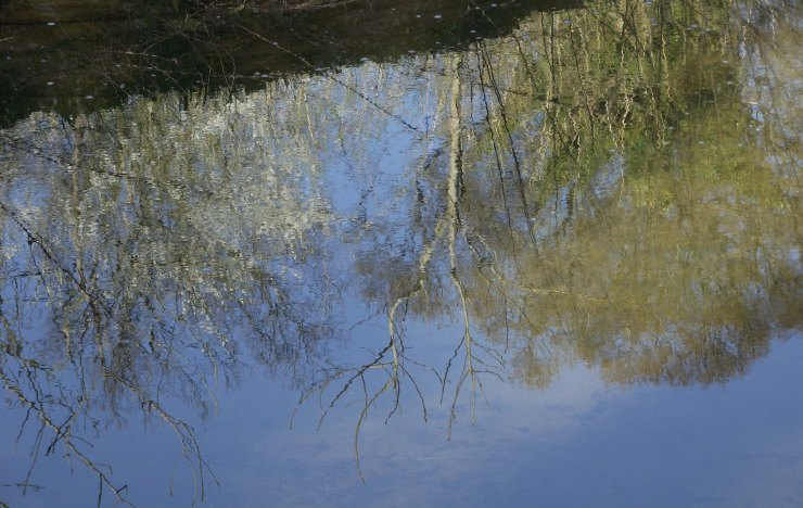 Reflections of Trees 2
