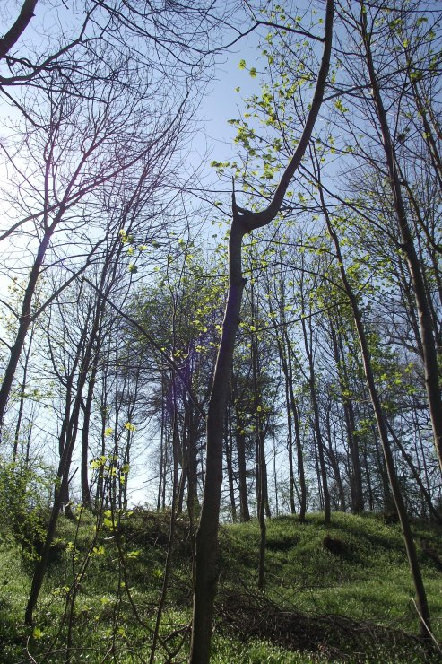 the copse in spring