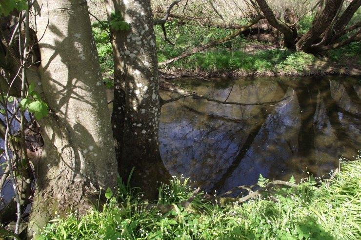 ahadows and reflections
