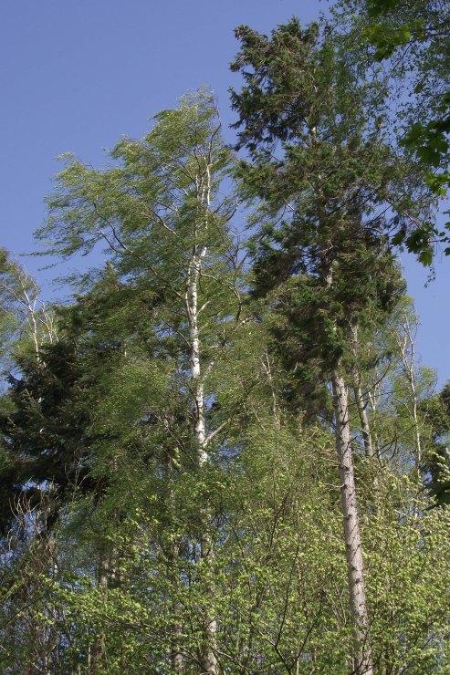 Wind Through Trees 1