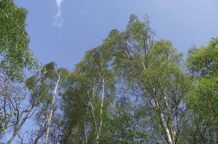 Wind Through Trees 2
