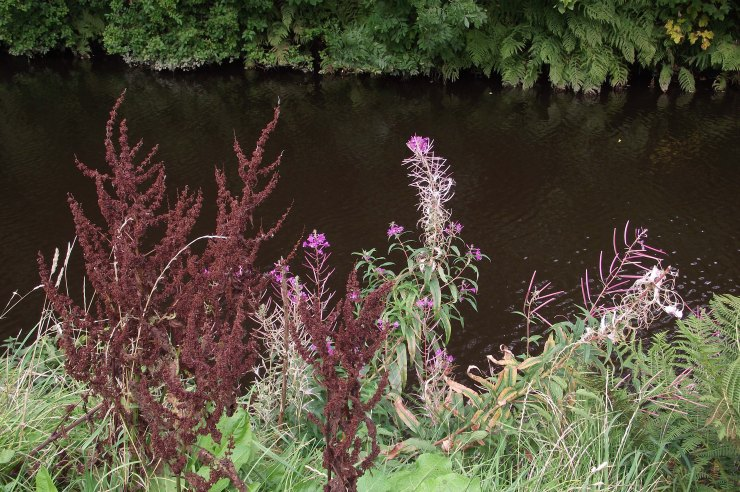 Canal Plants 2