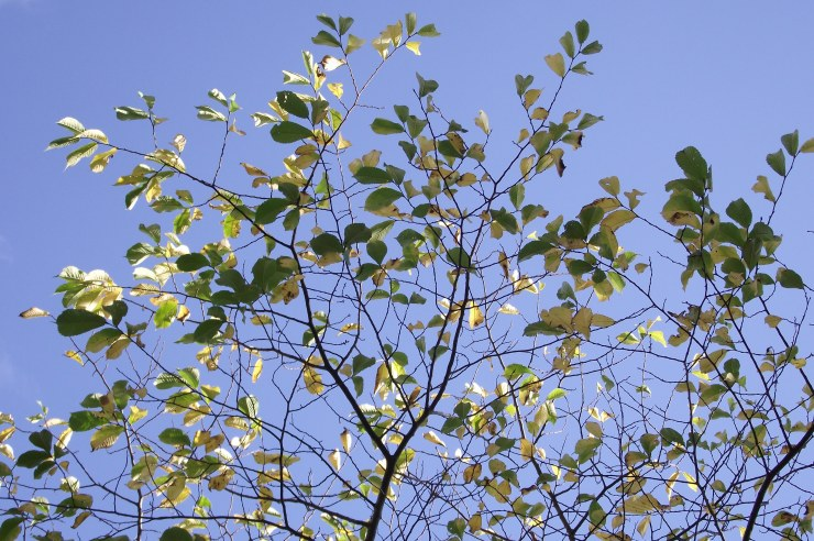 Bright Leaves Turning