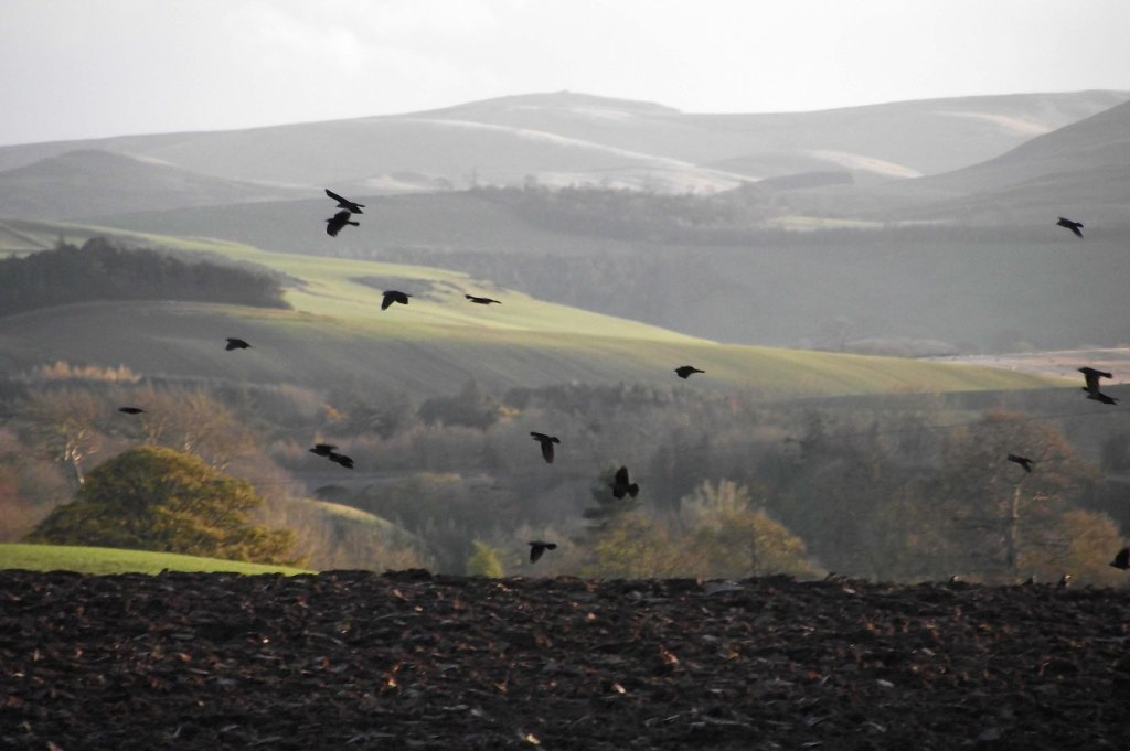 Crows 2