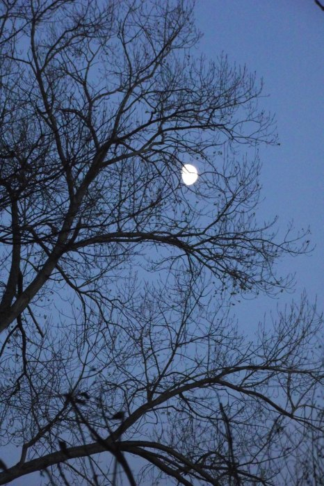 The Moon Caught Up in a Tree