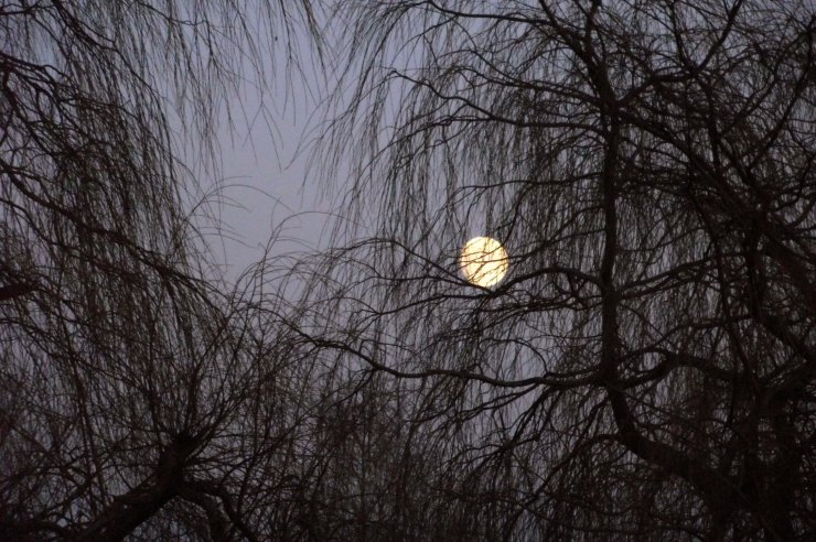 Moon and Willow Tree