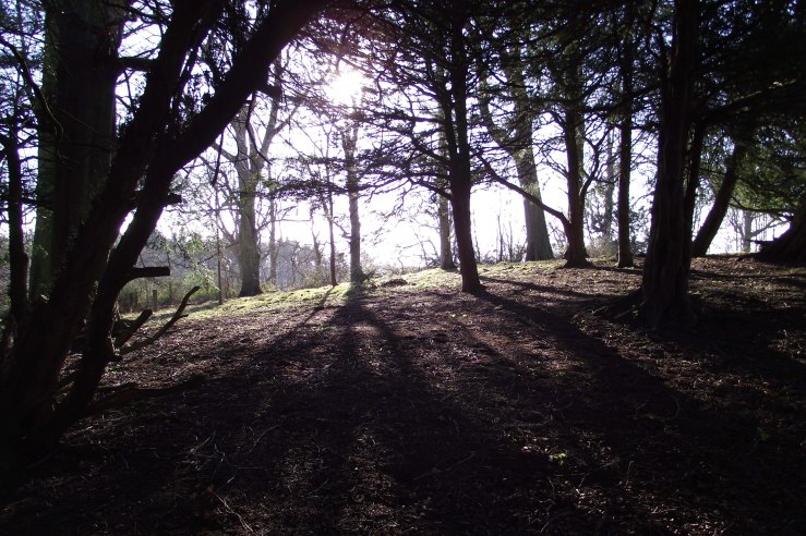 ashadows1