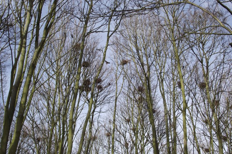 The Rooky Wood