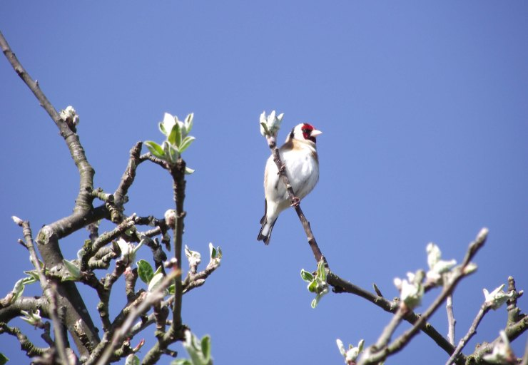 agoldfinch