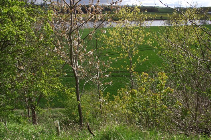 aspringtreesbyriver