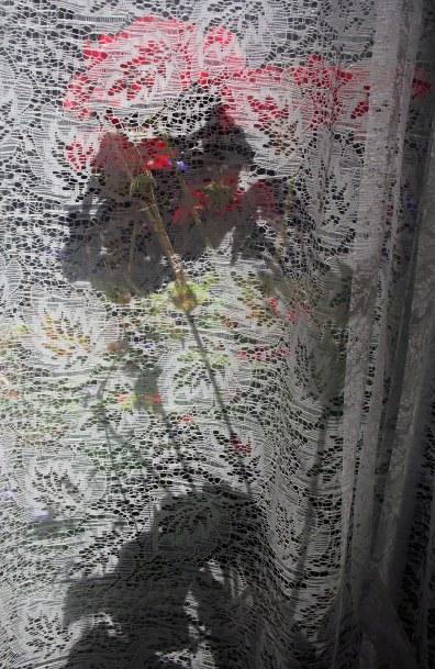 shadow of the geranium 2