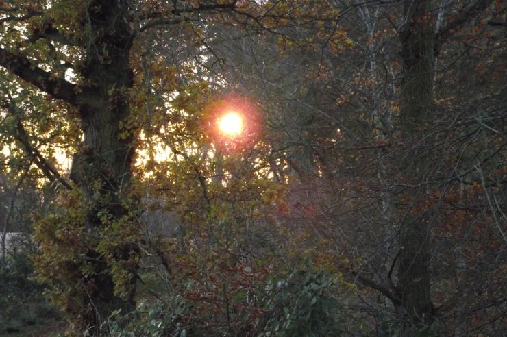 november-sun