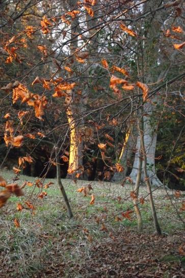 sun-on-the-trees2
