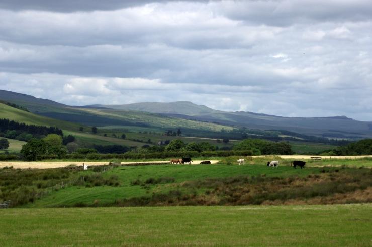 liddesdale landscape