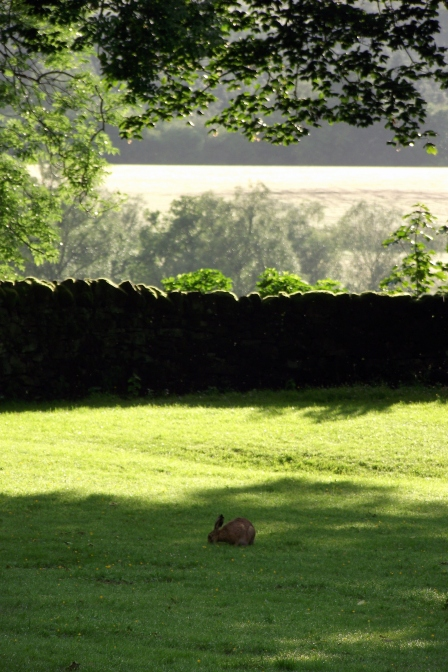 hare in the garth