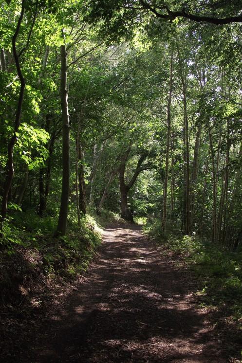 Path by Tweed