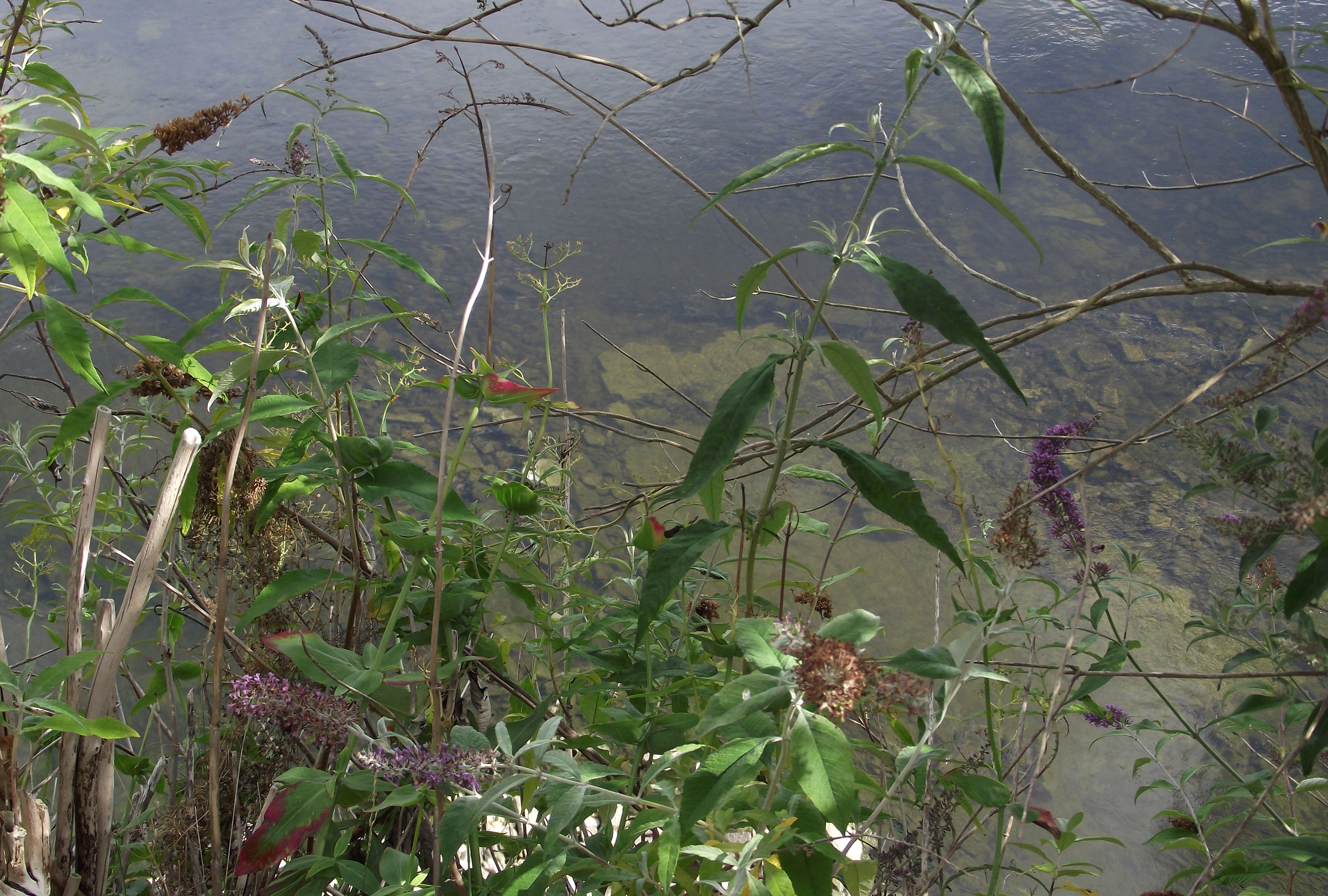 Plants Above Tweed