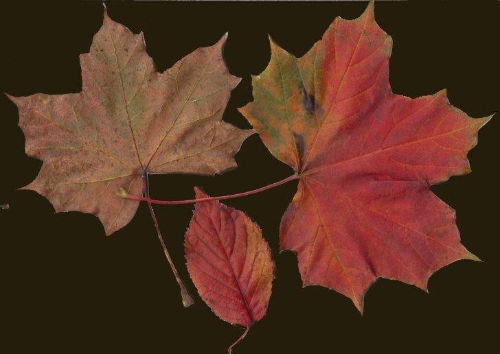 Tony's leaves