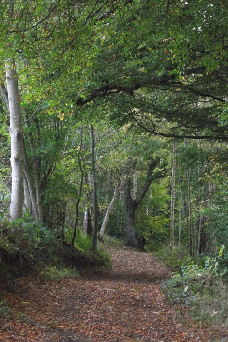 pathway1