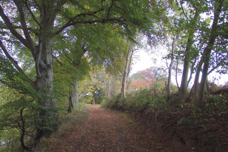 pathway2