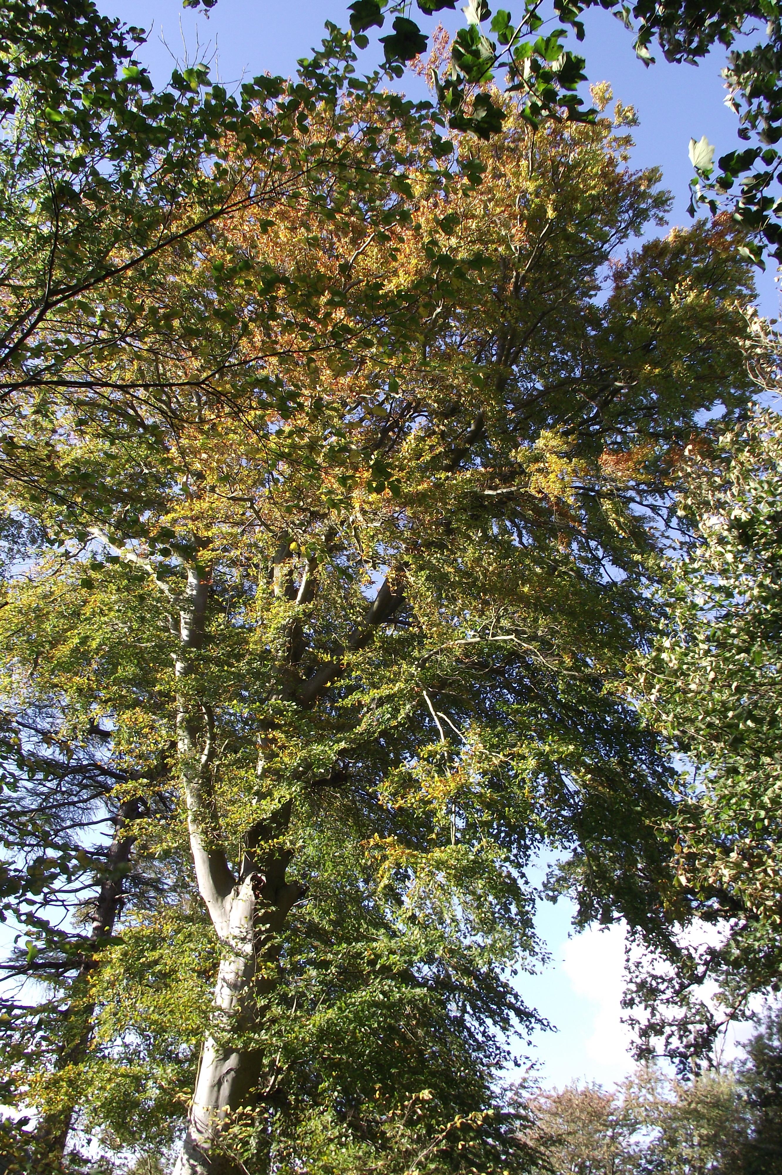tree in October
